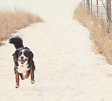 Run, Berner, Run! by TheJill