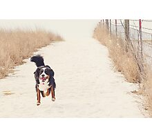 Run, Berner, Run! Photographic Print