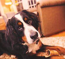 Sweet Bernese Mountain Dog by TheJill