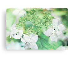 Pink Lacecap Hydrangea Flower Canvas Print