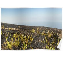 Lava Field and Plants Poster