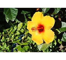 Bright Flower Photographic Print