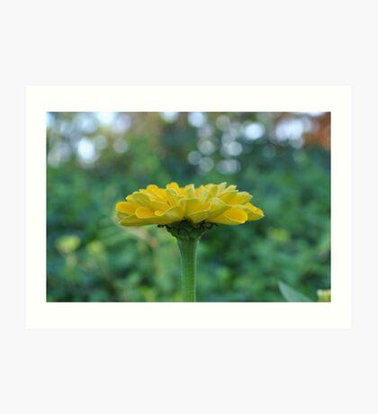 Yellow Flower in Bloom Art Print