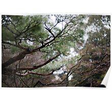 Koto-in garden trees Poster