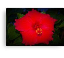 Pentagonal hibiscus Canvas Print