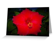 Pentagonal hibiscus Greeting Card