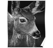 Doe, A Deer Poster