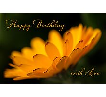 Calendula aglow - birthday Photographic Print