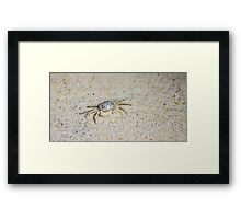 He's A Little Crabby Framed Print