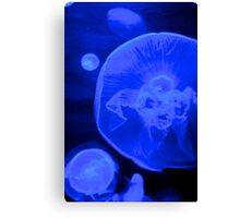blue Jelly fish Canvas Print