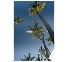 palm trees low angle Poster