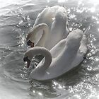 Swan Lake take 2 by lynn carter