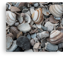Beach Shells Canvas Print