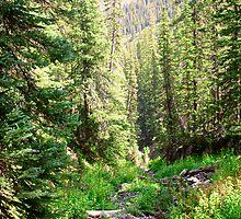 Forest View by Jesse Diaz