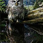 Owl by Sharon Poulton