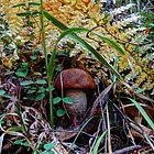 scaber stalk ~ Leccinum aurantiacum ~ by Charles & Patricia   Harkins ~ Picture Oregon