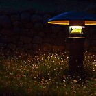 Monet Night Light by phil decocco