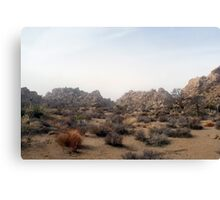 joshua tree deslation Canvas Print