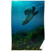 Slippery Seal. Poster