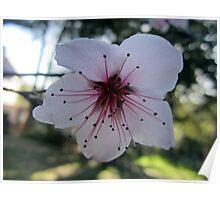 Floating Flower Poster