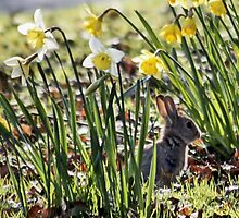 Bunny in Springtime by AnnDixon