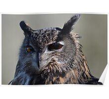 Bengal Owl close-up Poster