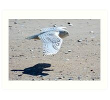 Snowy Owl at Jones Beach Art Print