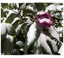 snowflakes on a flower and its leaves Poster