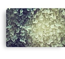 Window Rain  Canvas Print