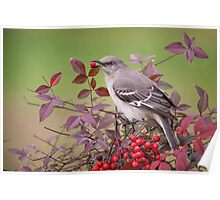 Mockingbird in Nandina Poster