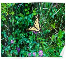 A Butterfly Using Its Wings Poster