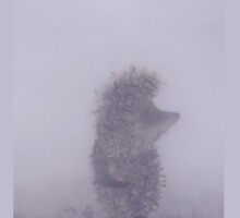 Hedgehog in the fog by Doerksej