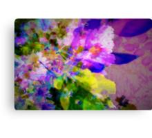 Delicate Crape-myrtle Canvas Print