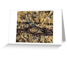 Robber Fly Parking Greeting Card