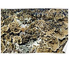 View of a coral reef Poster
