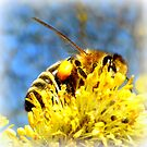 Bee with pollen on pussy willow by ©The Creative  Minds