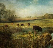 Cows in the Early Morning by Sarah Jarrett