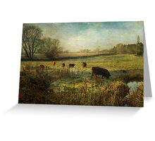 Cows in the Early Morning Greeting Card