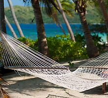 Empty hammock strung from palm trees by photoeverywhere