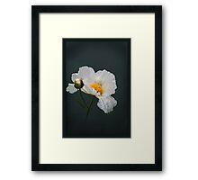 Delicate White Framed Print