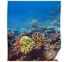 Coral growing on a reef Poster