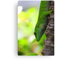 Lizard In A Tree Canvas Print