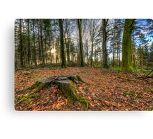 Stump in the woods Canvas Print