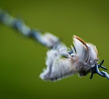 Feathers on a fence by Nicholas Barrington Haynes