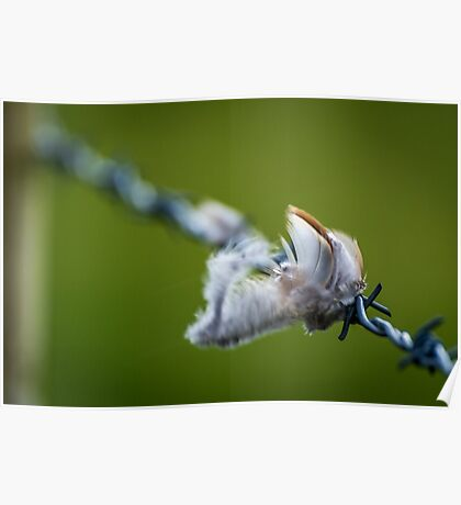 Feathers on a fence Poster