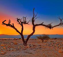 Sunrise in the desert   by Benjamin Gelman