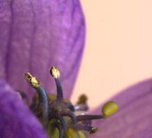 Purple Aconitum Napellus Sticker