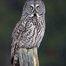 There be Gray Owls by Jim Cumming