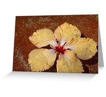 Single yellow hibiscus flower Greeting Card