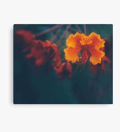 a welcome distraction Canvas Print